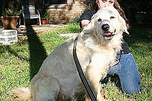 Zena Great Pyrenees Large Breed Rescue Dog From Texas Great