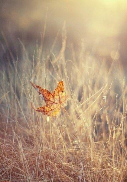 Pin Von Sabine Never Auf Schone Fotos Und Bilder Herbst Bilder Herbstbilder Herbst Fotografie