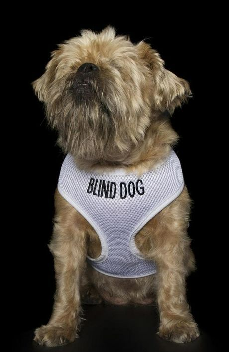 Dogs Don T See Themselves As Disabled Dog Photograph Blind Dog