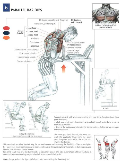 T-Bar Rows ♢ #health #fitness #exercises #diagrams #body #muscles - return to work note