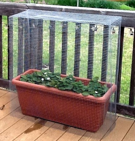 """Cage made with 1/2"""" hardware cloth to deter the squirrels and any other animal thief from getting at my strawberries.  Hardware cloth is ideal for making cages, no supports are necessary as it keeps its shape when bent.  You can find hardware cloth at Home Depot or any building supply place - usually in the fencing department."""