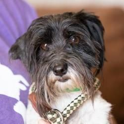 Available Pets At National Mill Dog Rescue In Colorado Springs Colorado Havanese Pet Adoption Adoption