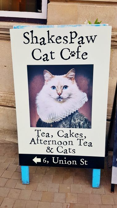Review Shakespaw Cat Cafe Stratford Upon Avon Victoria S Vintage Blog Cat Cafe Kitty Cafe Stratford