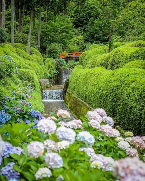 Rainy season (Tsuyu: #梅雨 ) is an interesting time of year. On the one hand it's most often raining! But on the flip side, the Hydrangea's (Ajisai) are in full bloom, and everything else is beautifully lush and green.