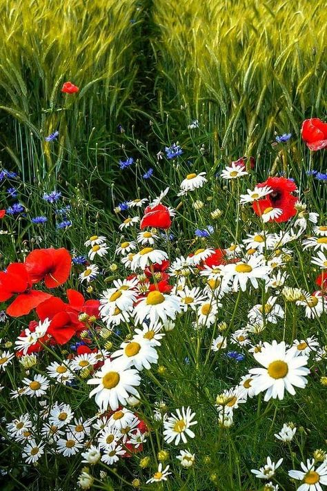 2017-05-26_06-16-41 | Цветы, Красота и Огород