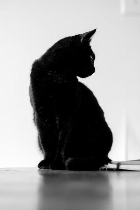 )O(black cat)O(