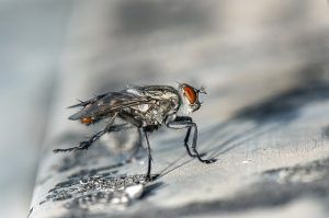 Flies Dream Meaning Interpretation Fly Infestation Insects Get