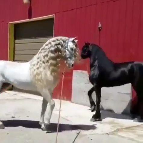 #Beauty #Horses