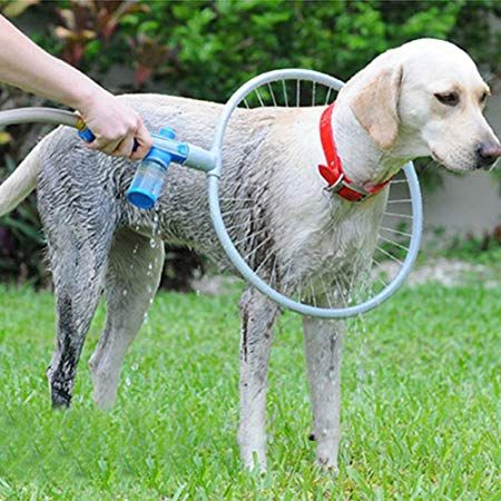 8 New Dogs Gadgets Invention That Are On Another Level Pet Dogs