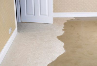 Water Damage Carpet Cleaning In Reno Nevada Scrub Brothers Wet Basement Waterproofing Basement Carpet Cleaning Pet Stains