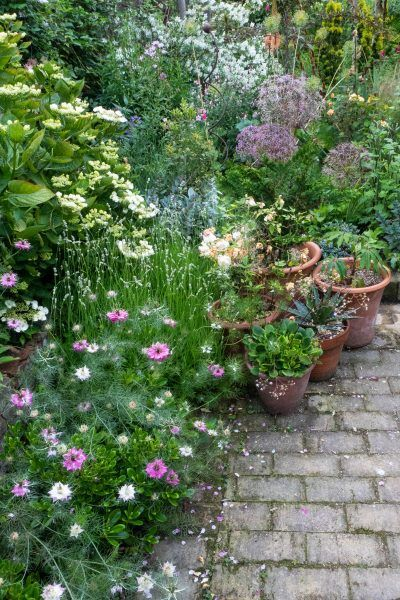 10 Garden Planting Ideas For Small Gardens The Middle Sized Garden Small Garden Borders Garden Plants Design Small Gardens