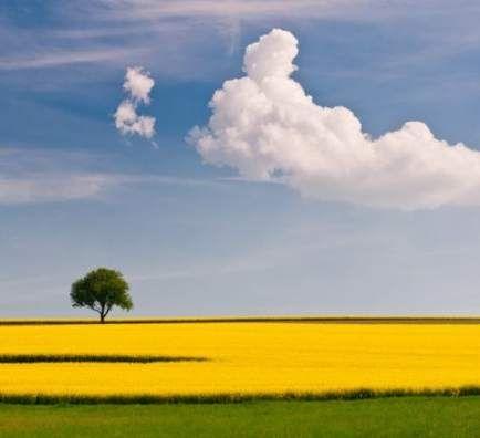 Landscape Nature Simple