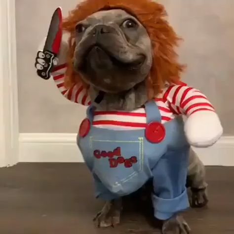 Chucky Dog Costume - Best Costumes for Small Dogs