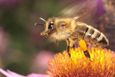 Pin Von Carmen Nicola Auf Bees Bienen Bienensterben Bilder