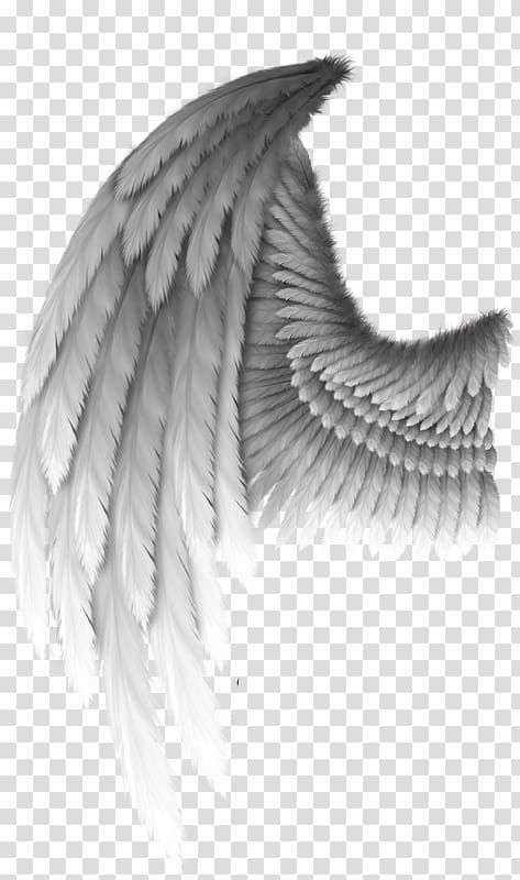 Angel Wings Png Clipart : angel, wings, clipart, Angel, Transparent, Background, Clipart, Wings, Feather, Illustration,, Drawing