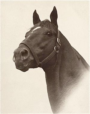 Man O' War Sire of 1937 Triple Crown winner, War Admiral and… All The Pretty Horses, Beautiful Horses, Animals Beautiful, Horses And Dogs, Animals And Pets, Man Of War, Sport Of Kings, Thoroughbred Horse, Racehorse