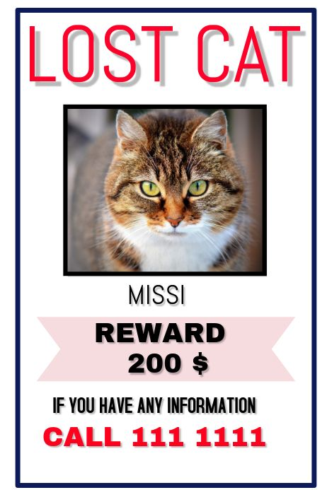 Missing Cat Named Chloe Milton Ma Pet Names Cat Names Lost Found