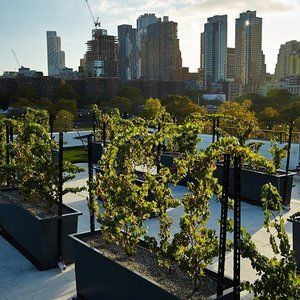 Everyday At Rooftop Reds Is Earthday Come Celebrate A New Division Of Urban Agriculture At New York City S Only Vine With Images Nyc Rooftop New York City Travel Rooftop