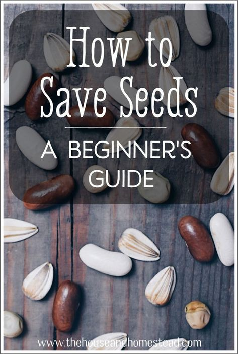 Learning how to save seeds will help you increase your self-sufficiency and grow healthy, productive plants year after year. Learn more about seed saving with this comprehensive guide! seeds How to Save Seeds: Seed Saving for Beginners Saving Seeds From Vegetables, Growing Vegetables, Saving Tomato Seeds, Gardening Vegetables, Garden Cactus, Garden Seeds, Planting Seeds, Garden Plants, Garden Grass