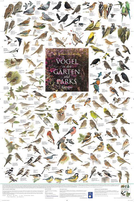 Lovely Poster V gel aus den G rten und Parks