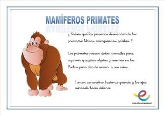 05 Mamiferos Primates Primates Vertebrados Mamíferos