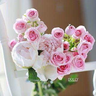 لرؤية التصميم على الخلفية يوجد في حساب Noory Vip 3 Noory Vip 3 Noory Vip 3 خامات خلفيات للتصميم مخطوطه مخطوطات لل Rose Beautiful Roses Petal