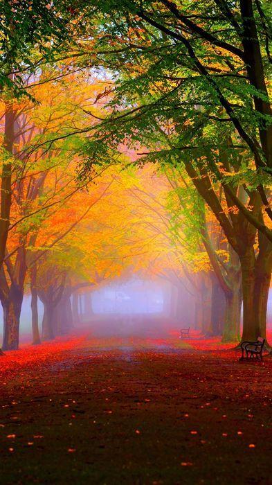 November Autumn Season Yellow Leaves Fall Leaf Tree Design Maple Autumn Landscape Landscape Beautiful Nature