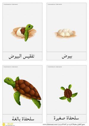 دورة حياة السلحفاة دورات حياة الحيوانات علوم للأطفال Art