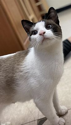 Pin On Cats In Need Of A Home