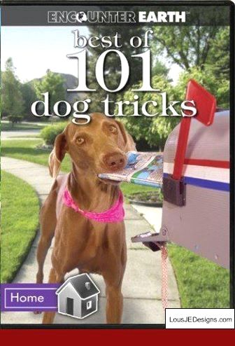 Tips On Training A Squirrel Dog And Pics Of Dog Training Tips For