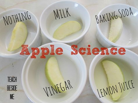 Science Experiment: Prevent Browning apple science experiment - What keeps them from turning brown?apple science experiment - What keeps them from turning brown? Easy Science Fair Projects, Science Fair Experiments, Science Lessons, Teaching Science, Science For Kids, Science Ideas, Science Fun, Earth Science, Summer Science