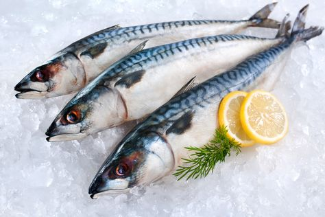 How To Ship Fresh Fish And Seafood In 2020 Mackerel Fish