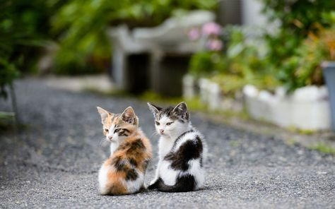 Apple Wallpapers Obedient Kittens On Background With Images Kittens Cutest Beautiful Cats Cute Cats