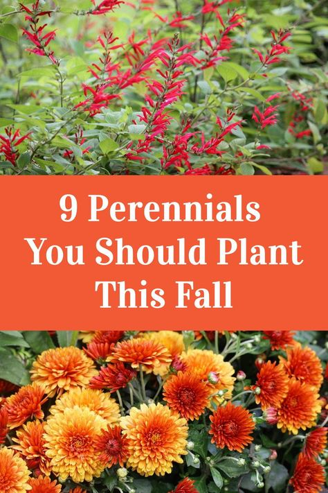 Garden Yard Ideas, Diy Garden, Lawn And Garden, Garden Projects, Garden Front Of House, House Front, Fall Perennials, Flowers Perennials, Perennials Fabric