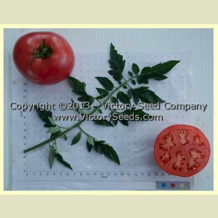 e2273f05d21ee543e4080bce2f731fb6 tomatoes seeds