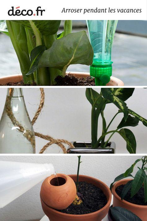 Comment Arroser Ses Plantes Vertes Pendant Les Vacances Arroser