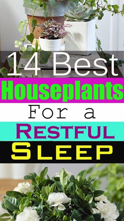 14 Best Houseplants for a Restful Sleep