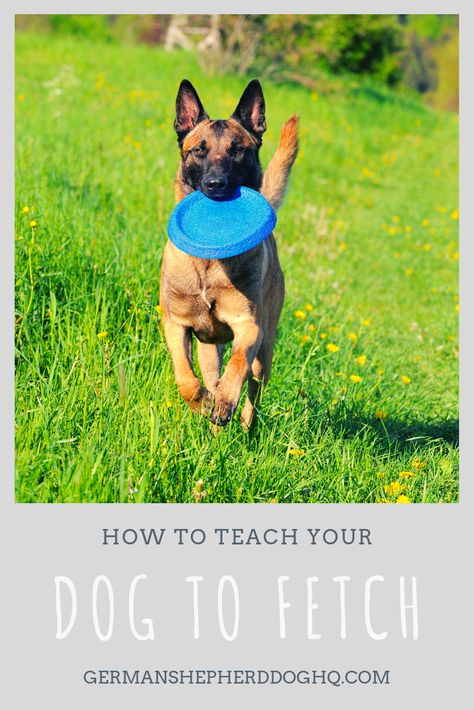Do You Want Your Dog To Know How To Bring A Toy Back To You Learn
