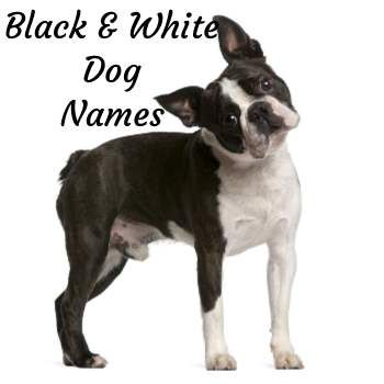 Unique Dog Names By Color Great Names Based On Hair Color Dog