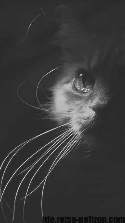 Wonderful Screen Long Hair Cat Breeds Concepts With Images Cats Crazy Cats Long Hair Cat Breeds