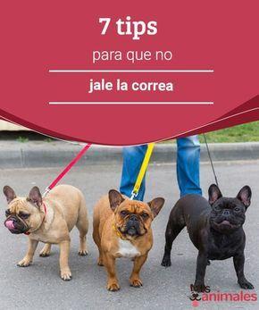 7 Tips Para Que No Jale La Correa Mis Animales Paseo De Perros Correas Para Perros Ropa Para Perros Chihuahua