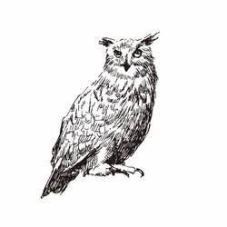 フクロウ かっこいい イラストの画像検索結果 フクロウ と