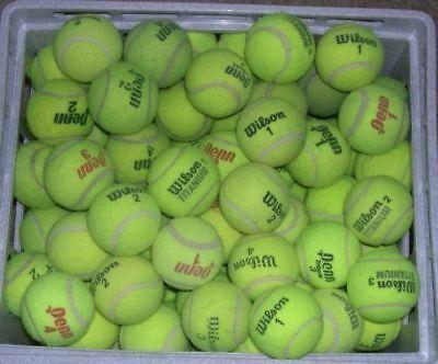 Advertisement Ebay 100 Used Tennis Balls Dog Toys Treats Low Price Penn Wilson Dunlop Tennis Balls Wilson Tennis Racquets Tennis Balls Tennis