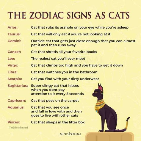 What type of cute fur ball are you based on your zodiac. #zodiactraits #astrology #zodiacmeme