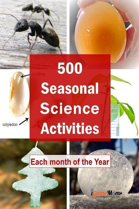 Month-by-month science activities for kids for each season of the year, with seasonal themes and activities for kids from preschool kindergarten to high school: holiday, weather, nature, plants, animals, space, ... Great STEM resource for science class at school, homeschool, science camp, after school activities at home.