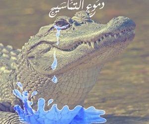 تفسير رؤية التمساح في الحلم معنى التماسيح في المنام Fish Pet Arabi Illustrations And Posters