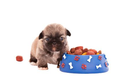 Dog Food Allergy Myths 1 Dogs Are Typically Allergic To Corn