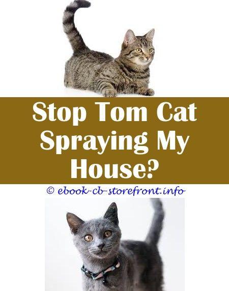 tom cats spraying smell