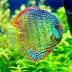 Brackish Aquarium Fish Archives Arizona Aquatic Gardens Freshwater Fish Tropical Fish Fish