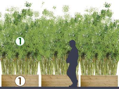 Rideau De Bambous Sur Balcon Scenes De Jardins